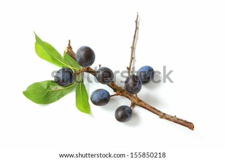 Sloes - Fruits of blackthorn (Prunus spinosa) isolated against white background - stock photo
