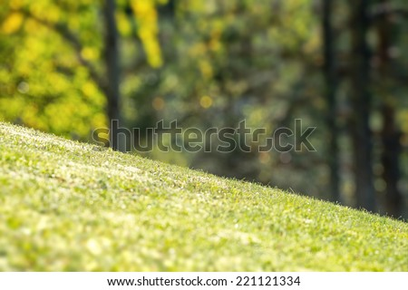 Sloping backyard with vibrant green grass and tree in the background  - stock photo