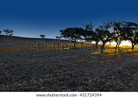 Sloping Hills of Portugal in the Autumn at Sunset - stock photo