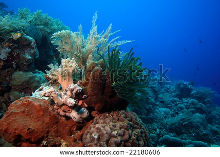 sloping wall on indonesian coral reef near bunaken island