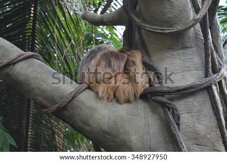 Sloth In Tree - stock photo