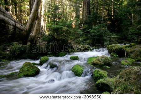 Slow shutter blend of small creek in wild forest
