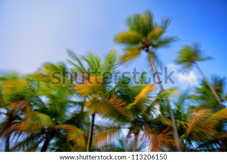 Slow shutter speed image looking up a tropical palm trees swaying in the breeze - stock photo