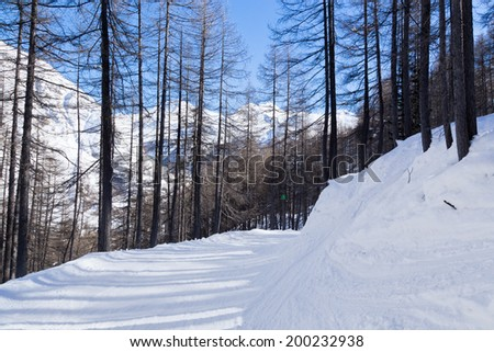 Slow ski track in the trees in the French Alps. - stock photo