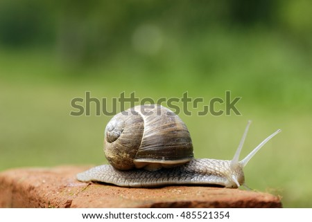 Slow snail moving along a brick.