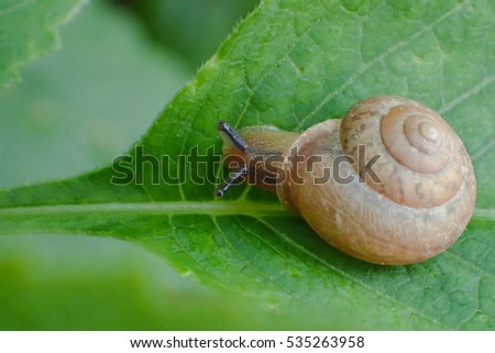 Slowly but surely. a snail on a leaf image