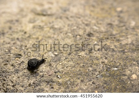 Slug and his journey on concrete