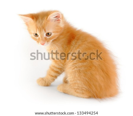 sly red young kitten - stock photo