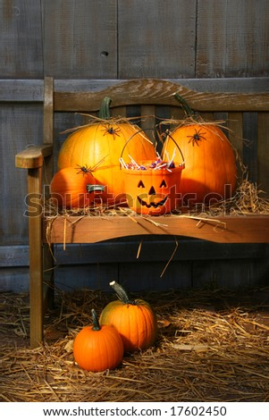 Small and big pumpkins on an old bench in the barn - stock photo