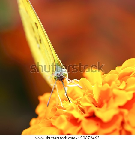 small and yellow butterfly on flower
