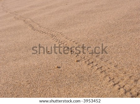 Small animal track in the desert