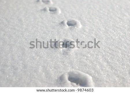 Small animal tracks in the freshly fallen snow - stock photo