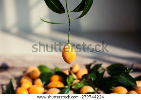 Small apricots on wooden background - summer photography background.   - stock photo