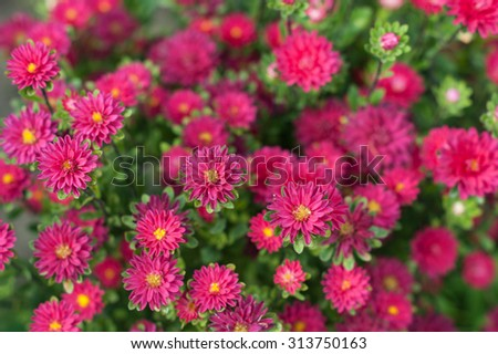 Small asters bouquet