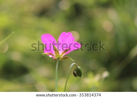small beetle and a flower - stock photo