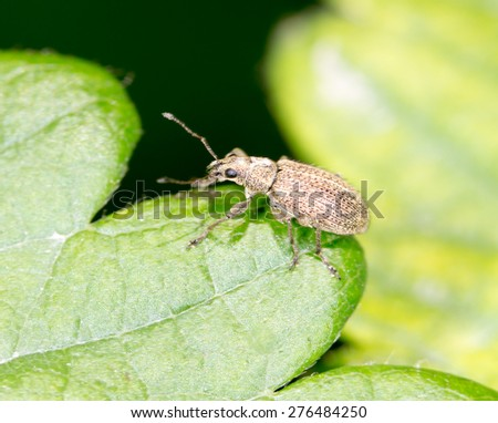 small beetle on a green leaf. close-up - stock photo