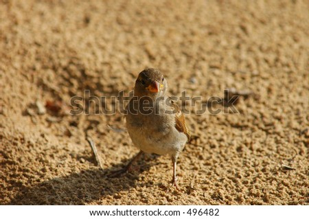Small Bird at the Beach