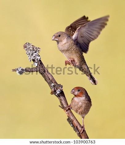 Small birds flying