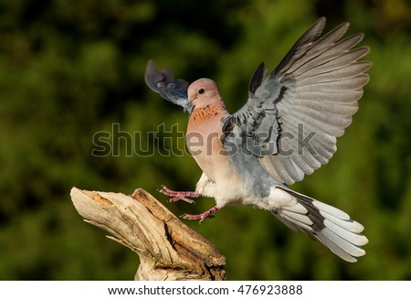 small bird flying