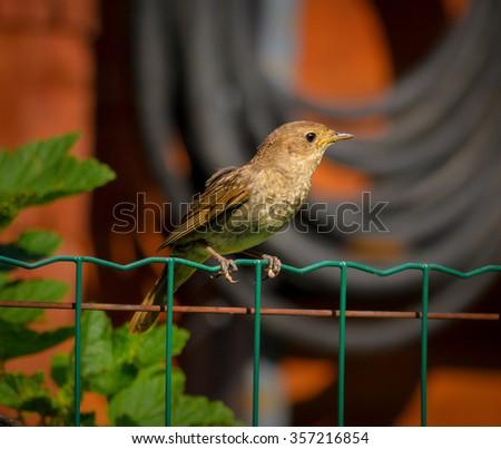 small bird in the garden - stock photo