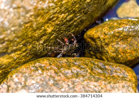 Small Black Sea crab hiding in the shadows of the cliffs from the bright hot sun. Selective soft focus. As a basis to illustrate holiday by the sea. Space for text