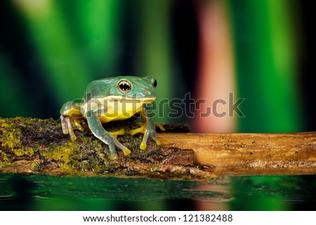 small blue green frog on a stick - stock photo