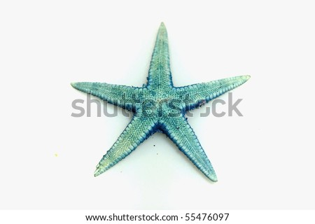 small blue starfish isolated on white