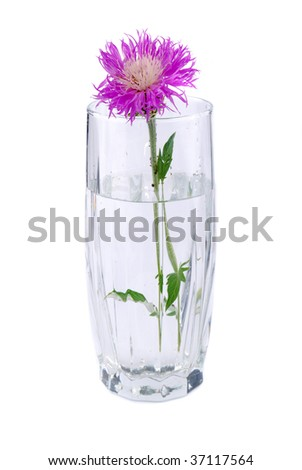 Small bouquet from colours collected in a transparent glass with water.