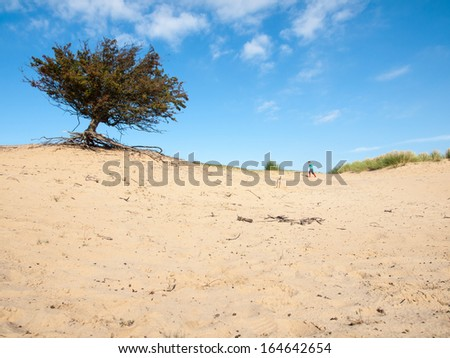 small boy in an autumn dune landscape with blue sky and hawthorn tree