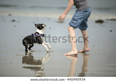 Small Boy playing happily with Boston Terrier at the beach