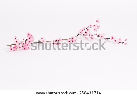 Small Branch of Cherry Blossoms on White Background - stock photo