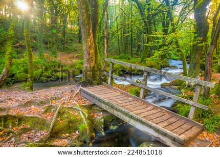 Small bridge in the woods at Golitha Falls on the River Fowey Bodmin Moor Cornwall England UK Europe - stock photo