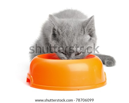 small british  kitten on the white background - stock photo