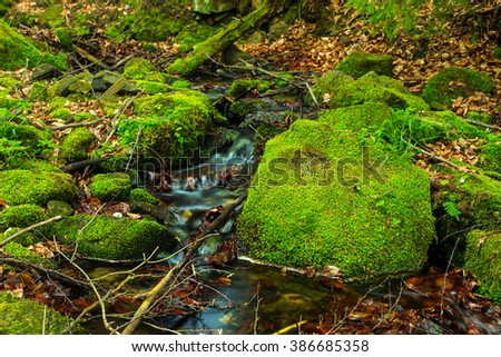 small brook in a forest - stock photo