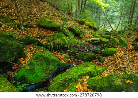 small brook in a mountain canyon - stock photo