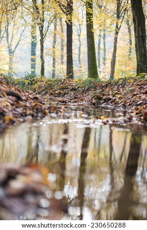 small brook in autumnal forest  - stock photo