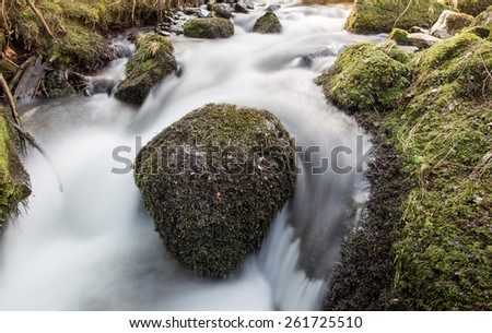 small brook in black forest, Germany  - stock photo