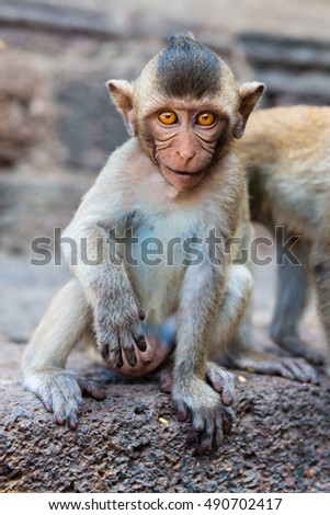 Small brown eyed monkey with a cute face