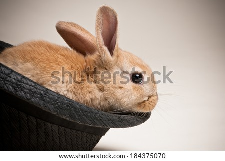 Small brown haired young easter bunnny rabbit sitting in black woven hat on neutral light brown background - stock photo