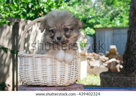 Small brown puppy sitting in the basket