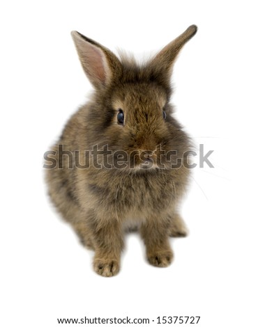 Small brown rabbit isolated on white, shallow depth of field - stock photo