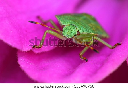 small bug on a flower. - stock photo