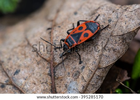 small bug sit on a dry leaf - stock photo