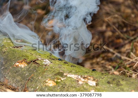 Small bugs on steaming the trunk of an old rotten tree.  - stock photo