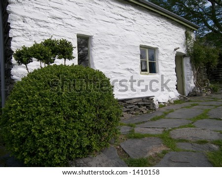 Small bush in front of cottage