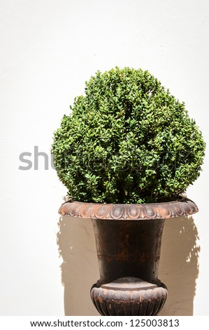 small bush - nice background