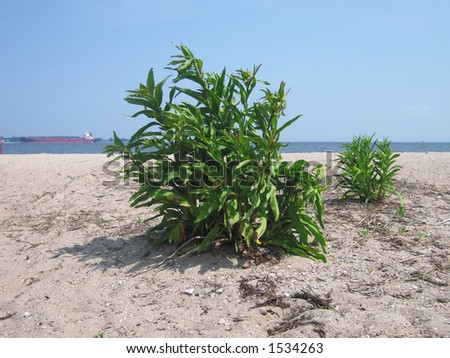 small bush on the beach