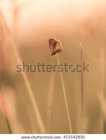 Small butterfly in vintage background