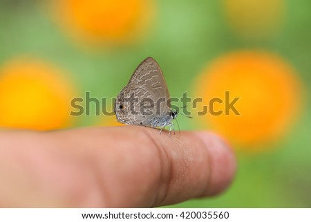 Small butterfly on the finger - stock photo