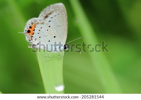 Small butterfly rests on grass